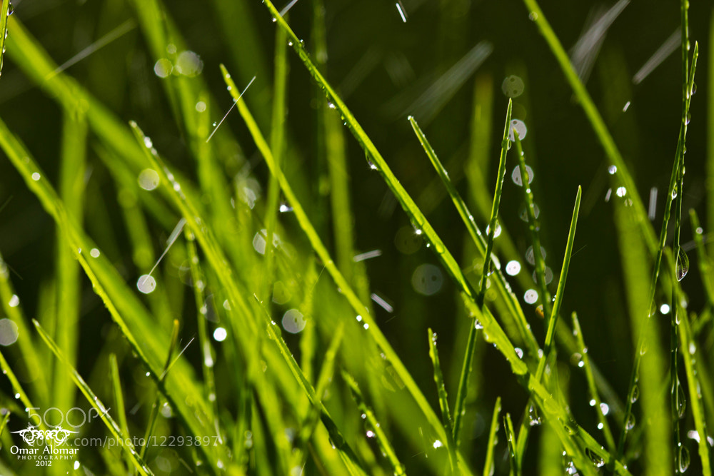 Photograph Drops  by Omar Yousif on 500px