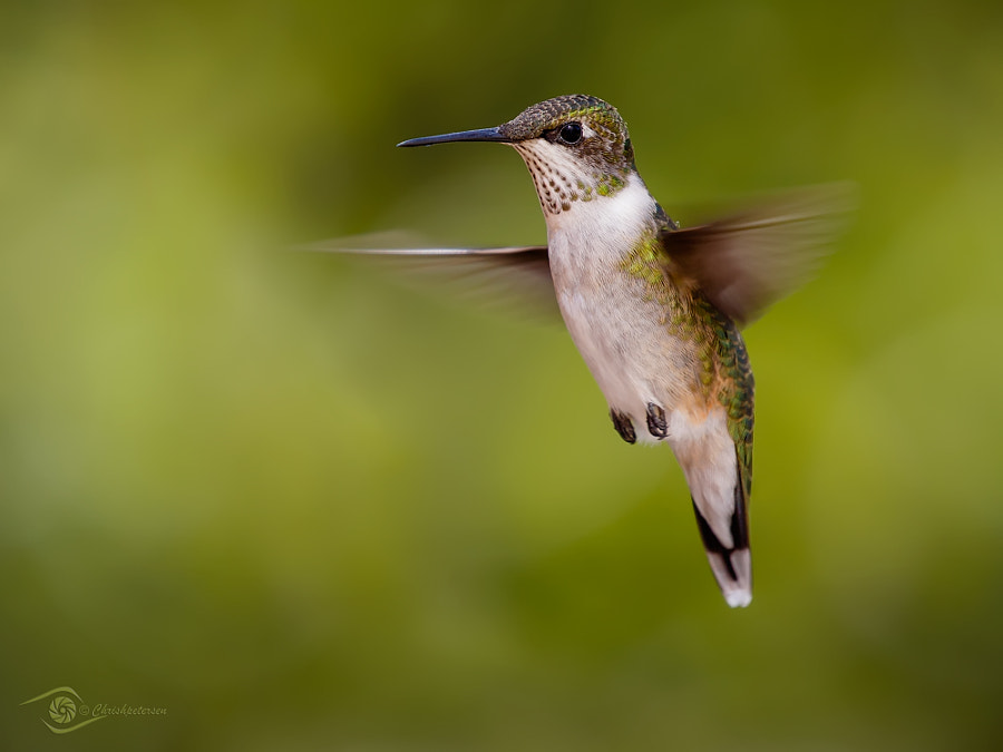 Last Hummer of Summer by Chris Petersen on 500px.com