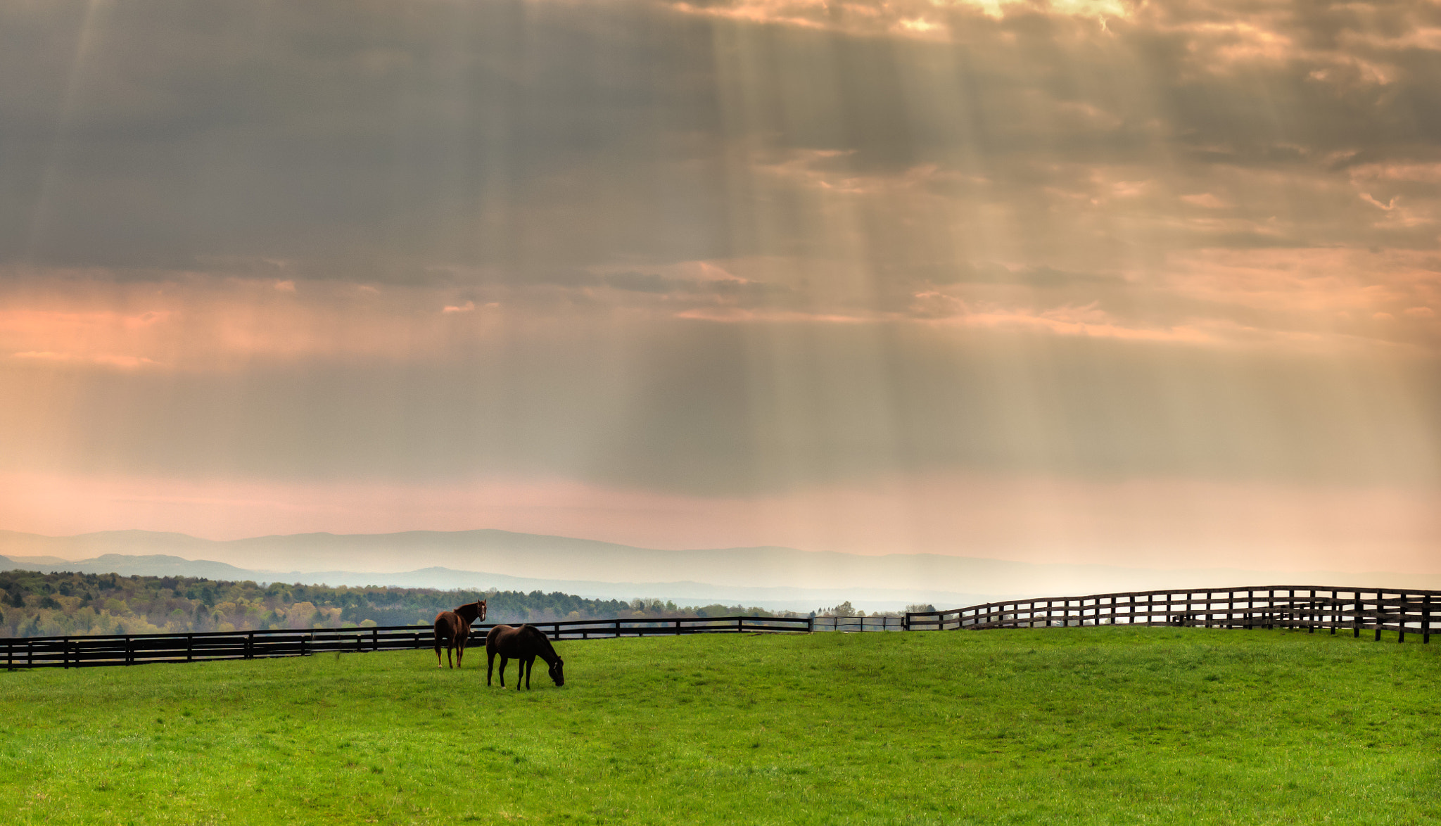 Photograph Sunlit Horses on Derby Day  by Stephen Puliafico on 500px