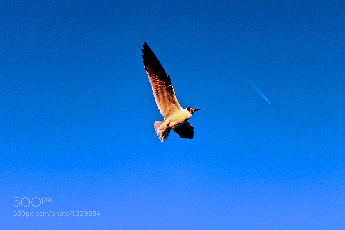 Photograph Soaring by Jack Mayo on 500px