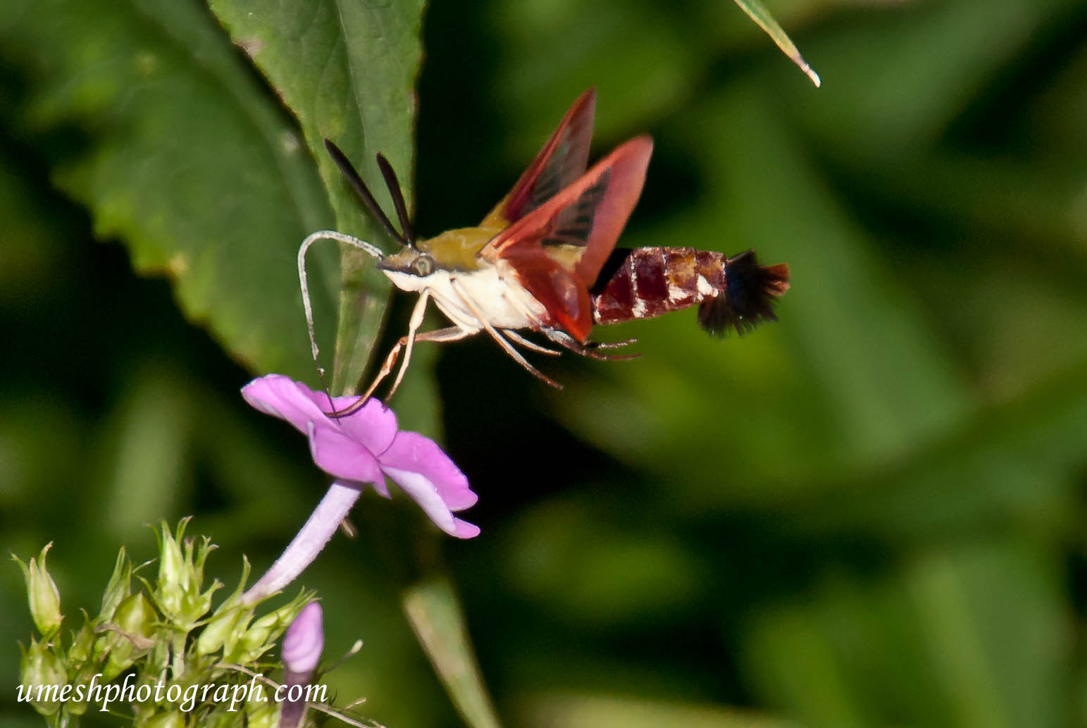 Photograph Insects by Umesh Photograph on 500px