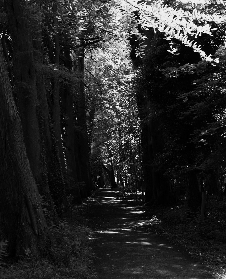 Photograph Into the Woods by Adhib M on 500px