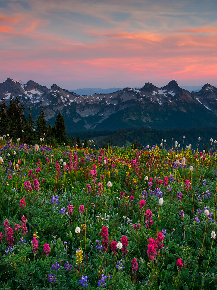 Photograph Mount Rainier - Tatoosh Range by Kevin McNeal on 500px