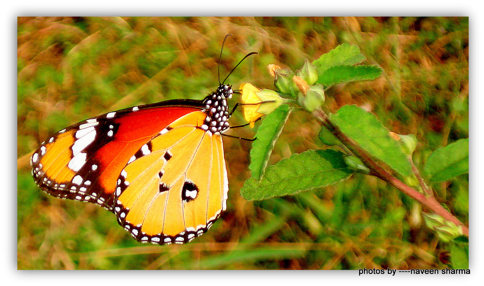 Photograph super butterfly in nice vicinity by naveen sharma on 500px