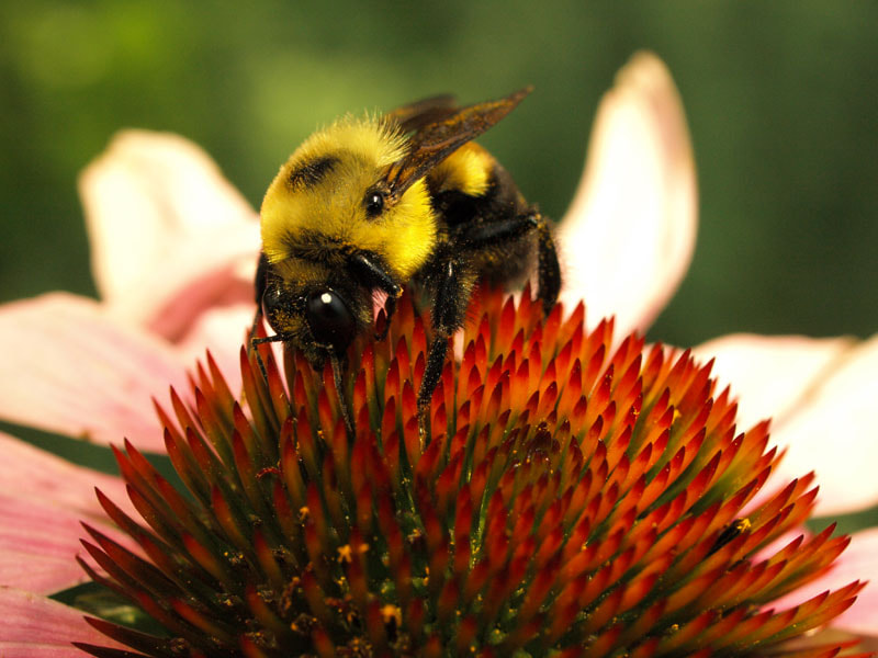 Photograph Bumblebee's Delight by Claudia Matesiu on 500px