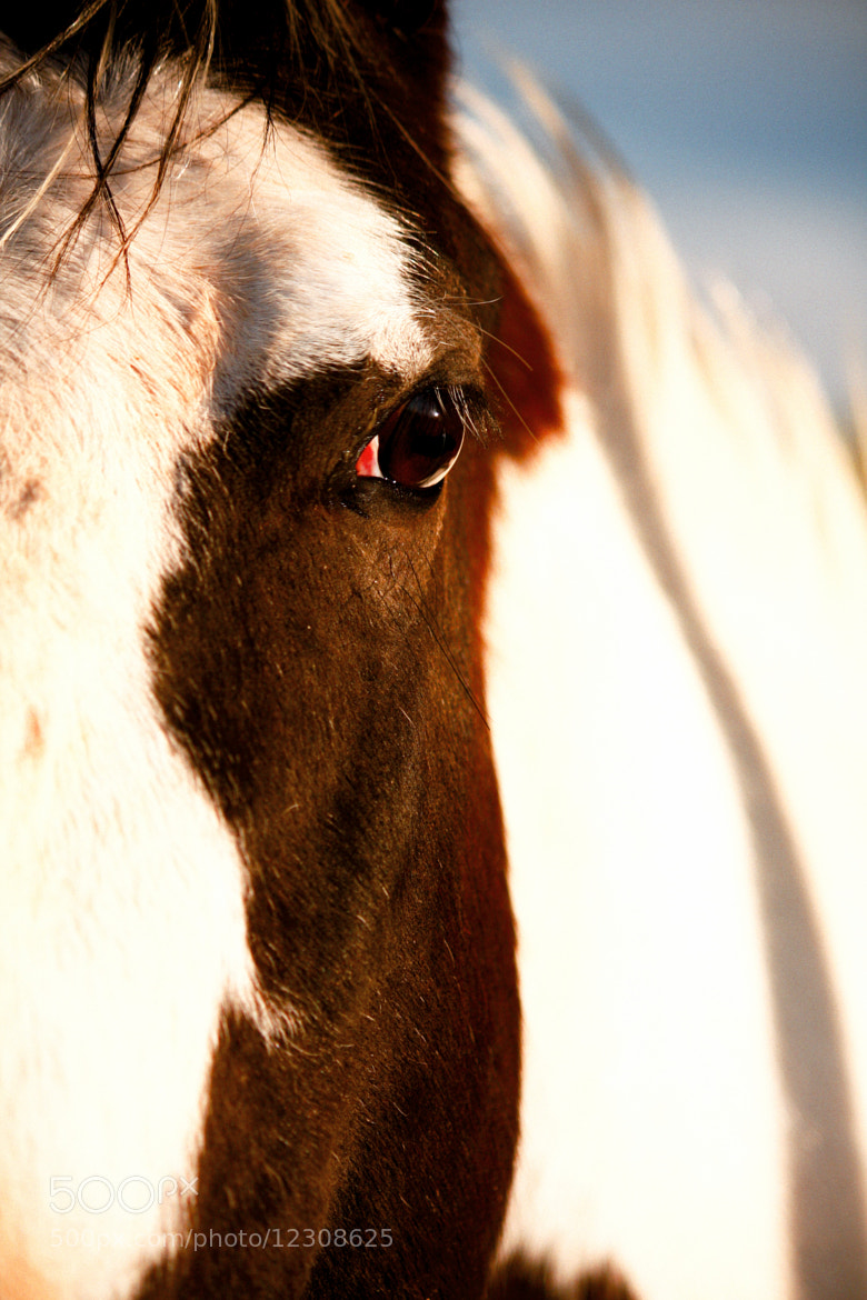 Photograph close-up of a white horse by marios savva on 500px