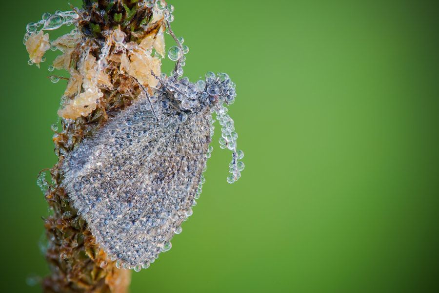 Morning dew de David Chambon sur 500px.com