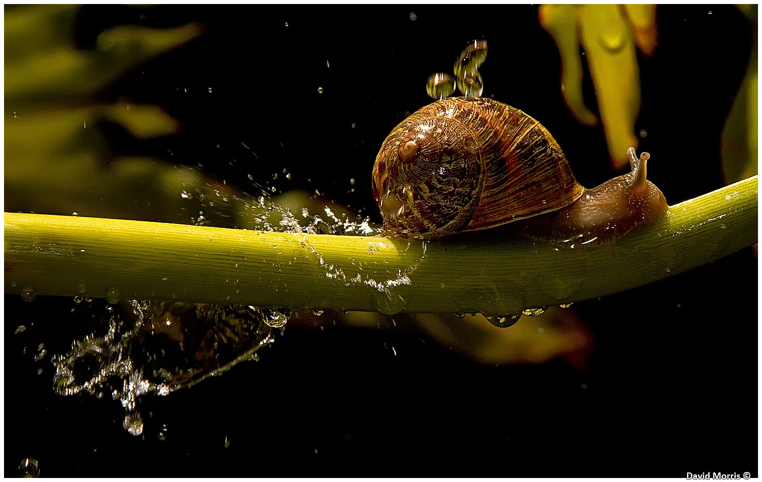 Photograph Dodging the drops by Dave Morris on 500px