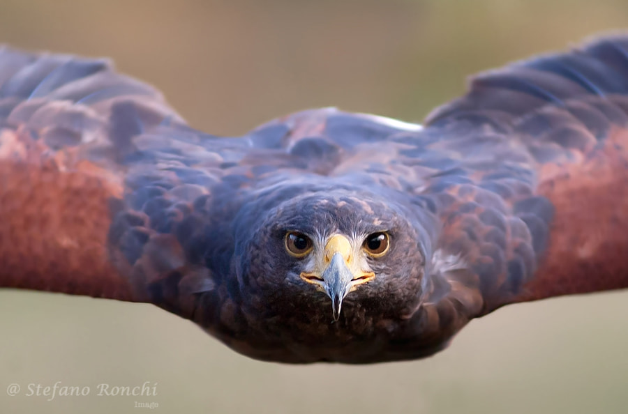 i fly to you by Stefano Ronchi on 500px.com