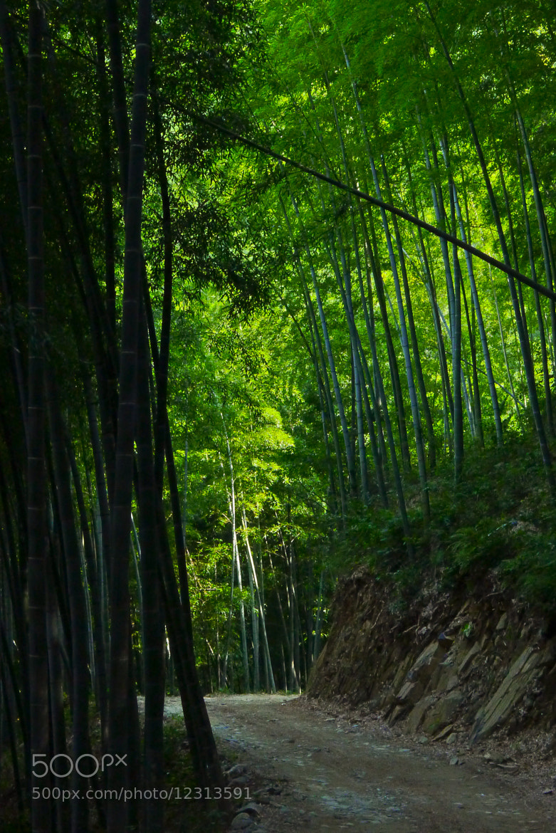 Photograph Bamboo forest by Paul Wang on 500px