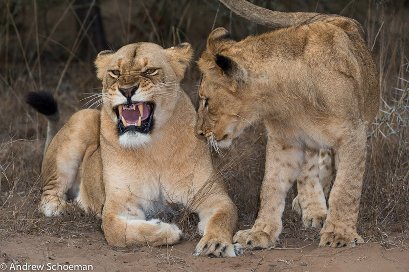 Photograph Not now! by Andrew Schoeman on 500px