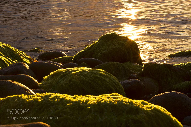 Photograph Coastal traces 2 by Jasper van den Heuvel on 500px