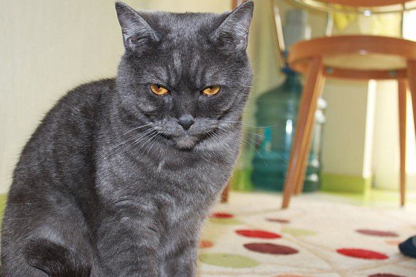 Photograph serious cat by Anna Divnich on 500px