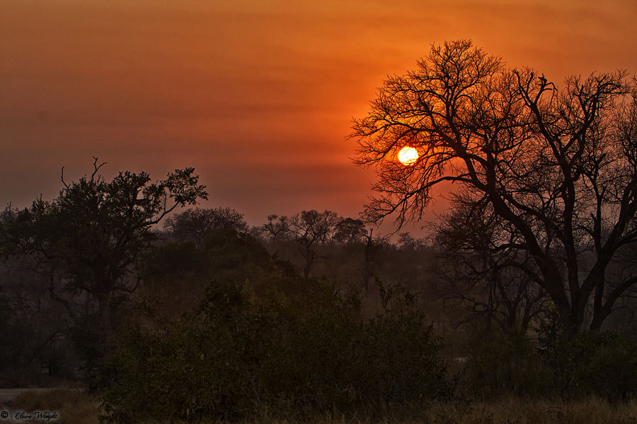 Photograph Kruger Sunrise by Clive Wright on 500px