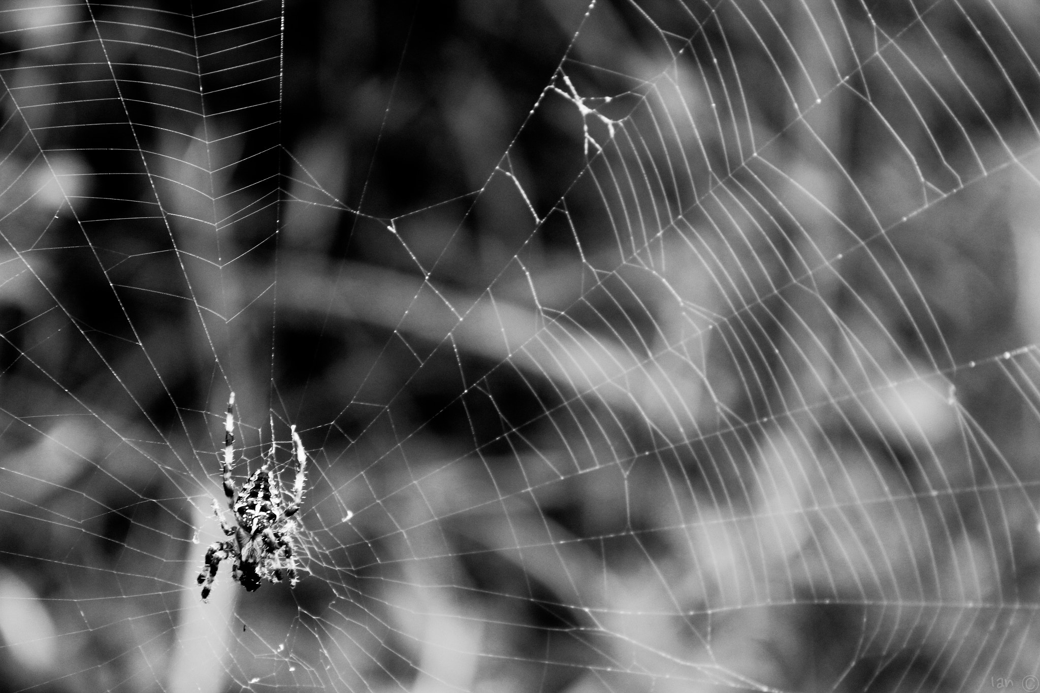 Photograph Spider by IAN C. on 500px