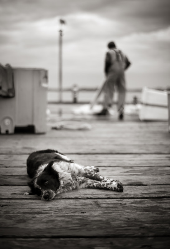 Photograph Dog on the docks by Ross Holmberg on 500px