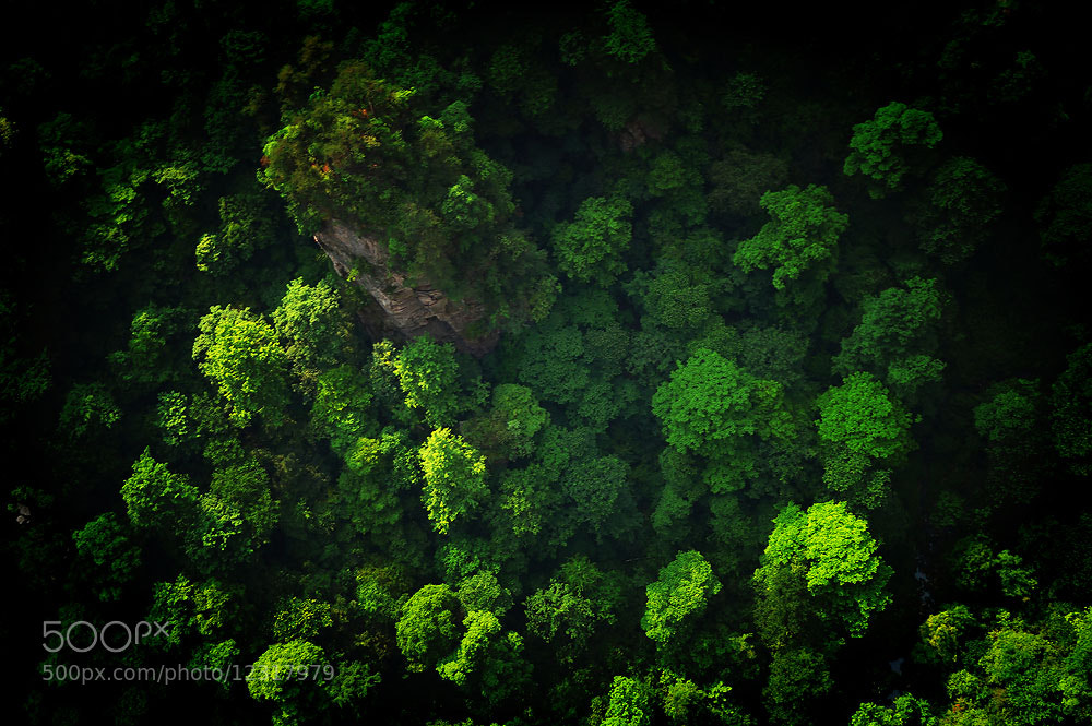 Photograph deep green by Jumrus Leartcharoenyong on 500px