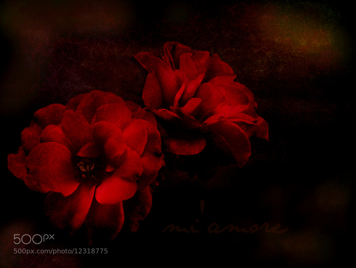 Photograph mi' amore by susan spinola on 500px