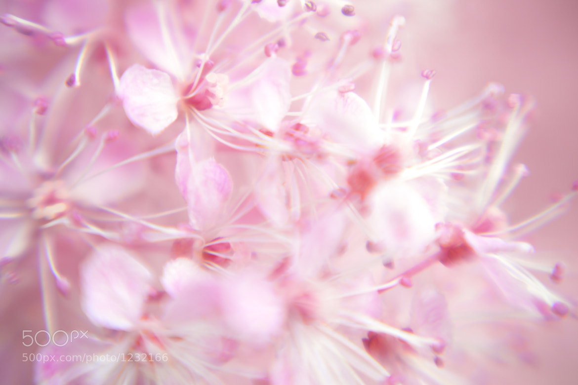 Photograph Blush by Natalie Coleman on 500px