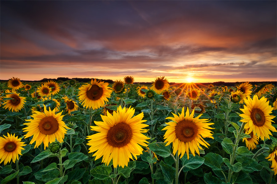 Photograph Here comes the Summer by Michael  Breitung on 500px