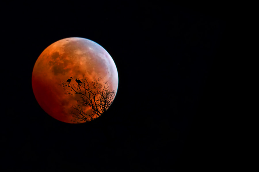 Bloody Moon by Bess Hamiti on 500px.com