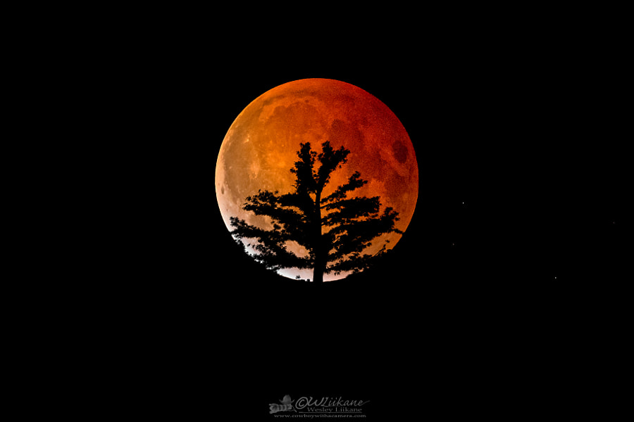 Blood Moon and the Pine by Wesley  Liikane on 500px.com