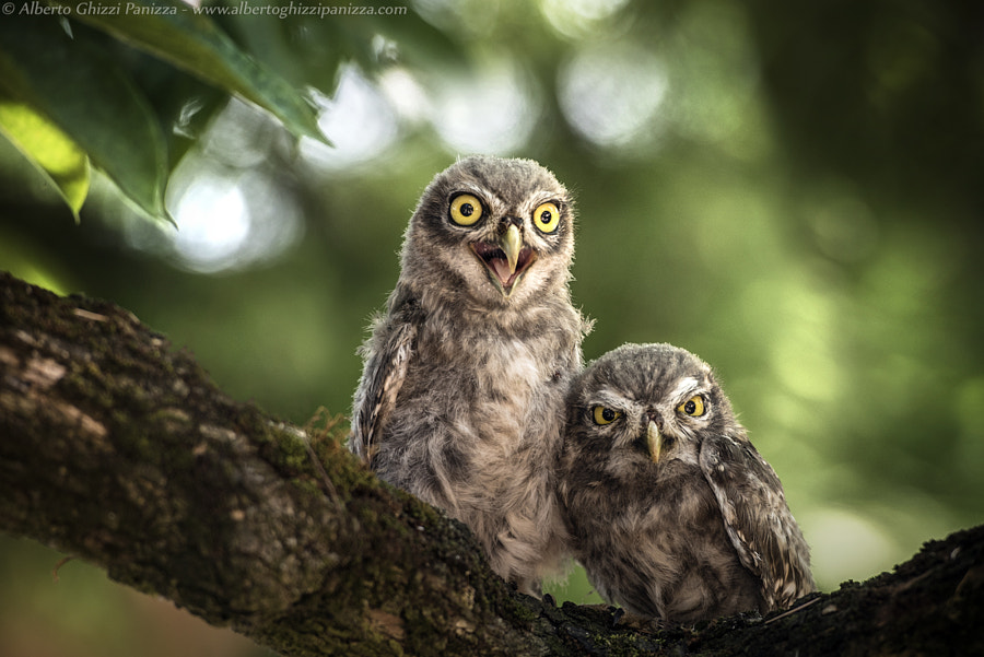 Ooh my goooodddddd!!!! by Alberto Ghizzi Panizza on 500px.com