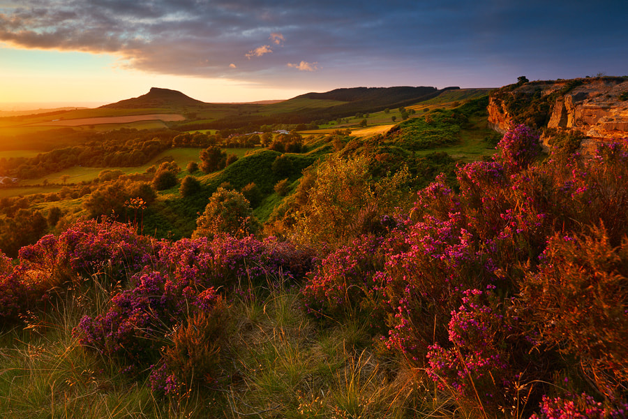 Photograph Moorland Heather, Stormlight by John Robinson on 500px