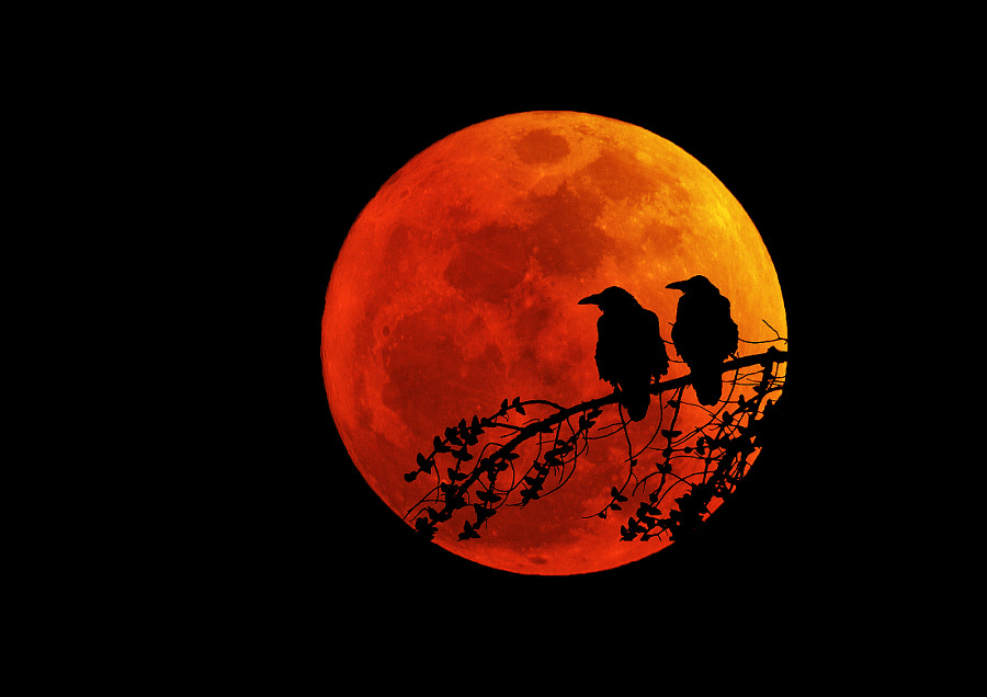 Blood moon shines