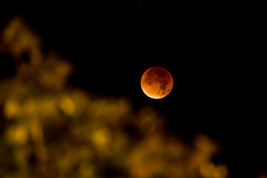 Blood Moon by Kevin Prud