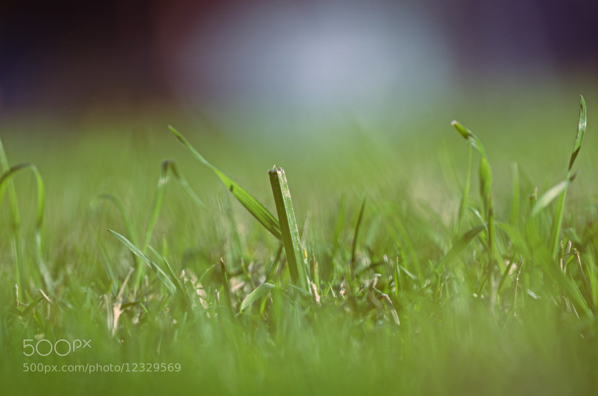 Photograph Green by Glen Hadiardja on 500px