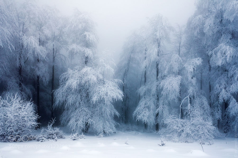 Photograph Frozen Forest by Evgeni Dinev on 500px