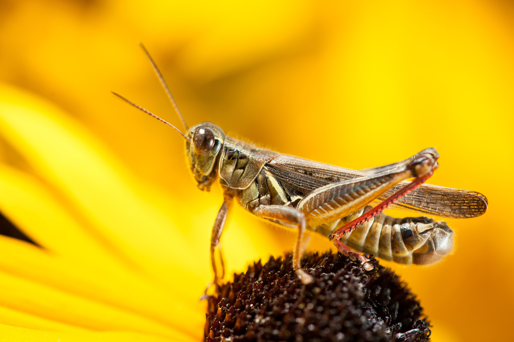 Photograph Grasshopper by Justin Lo on 500px
