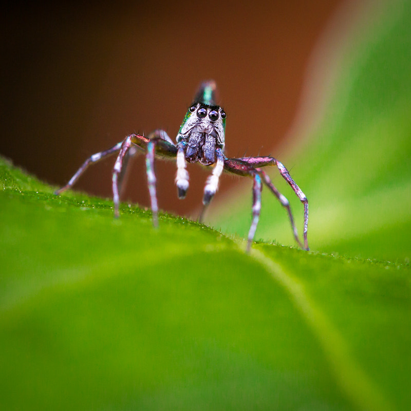 Photograph Spider II by Te Montri on 500px