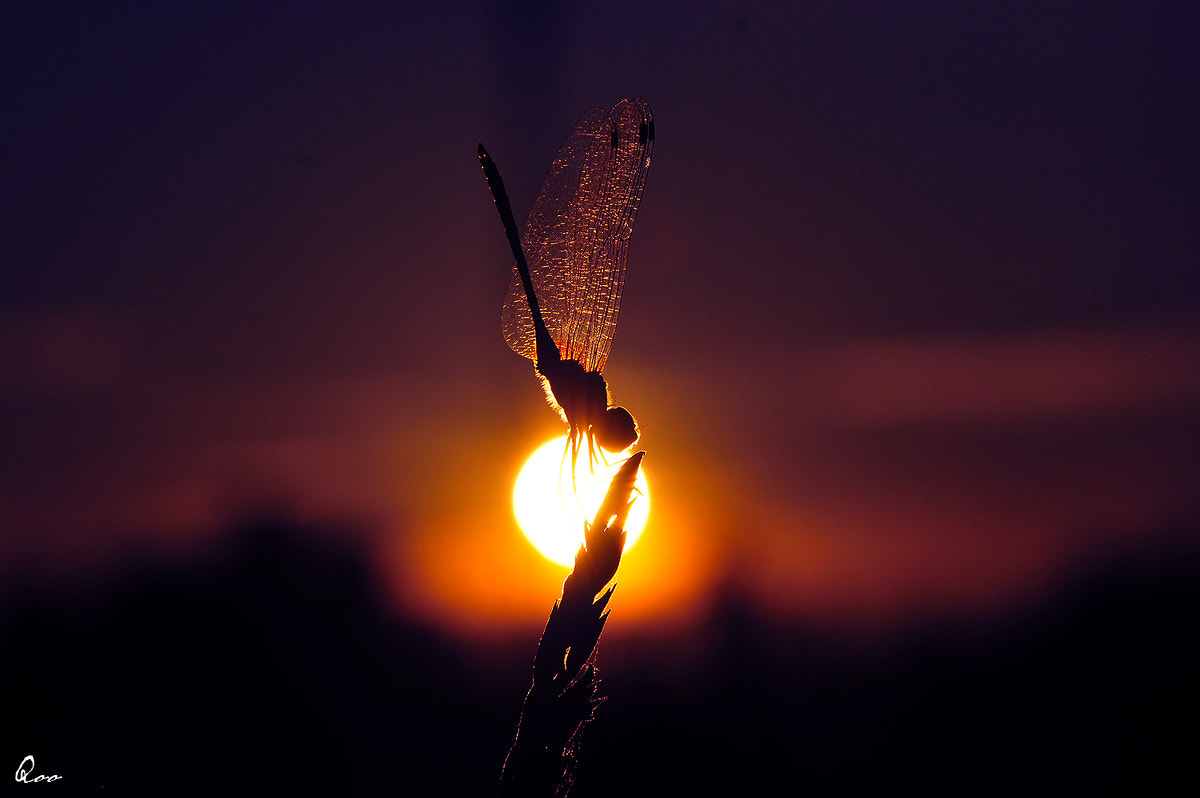 Photograph Dragonfly eat the sun by Kim Thong Zuk  on 500px