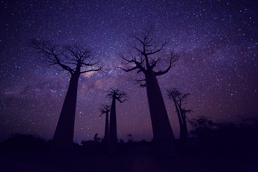 Night in Avenue of the Baobabs