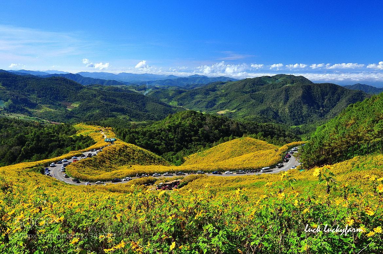 Photograph  Tung Bua Tong Forest Park  by Luck Luckyfarm on 500px