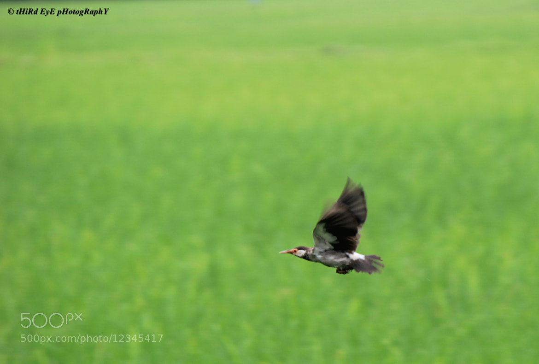 Photograph Through the air... by Ananta Chowdhury on 500px