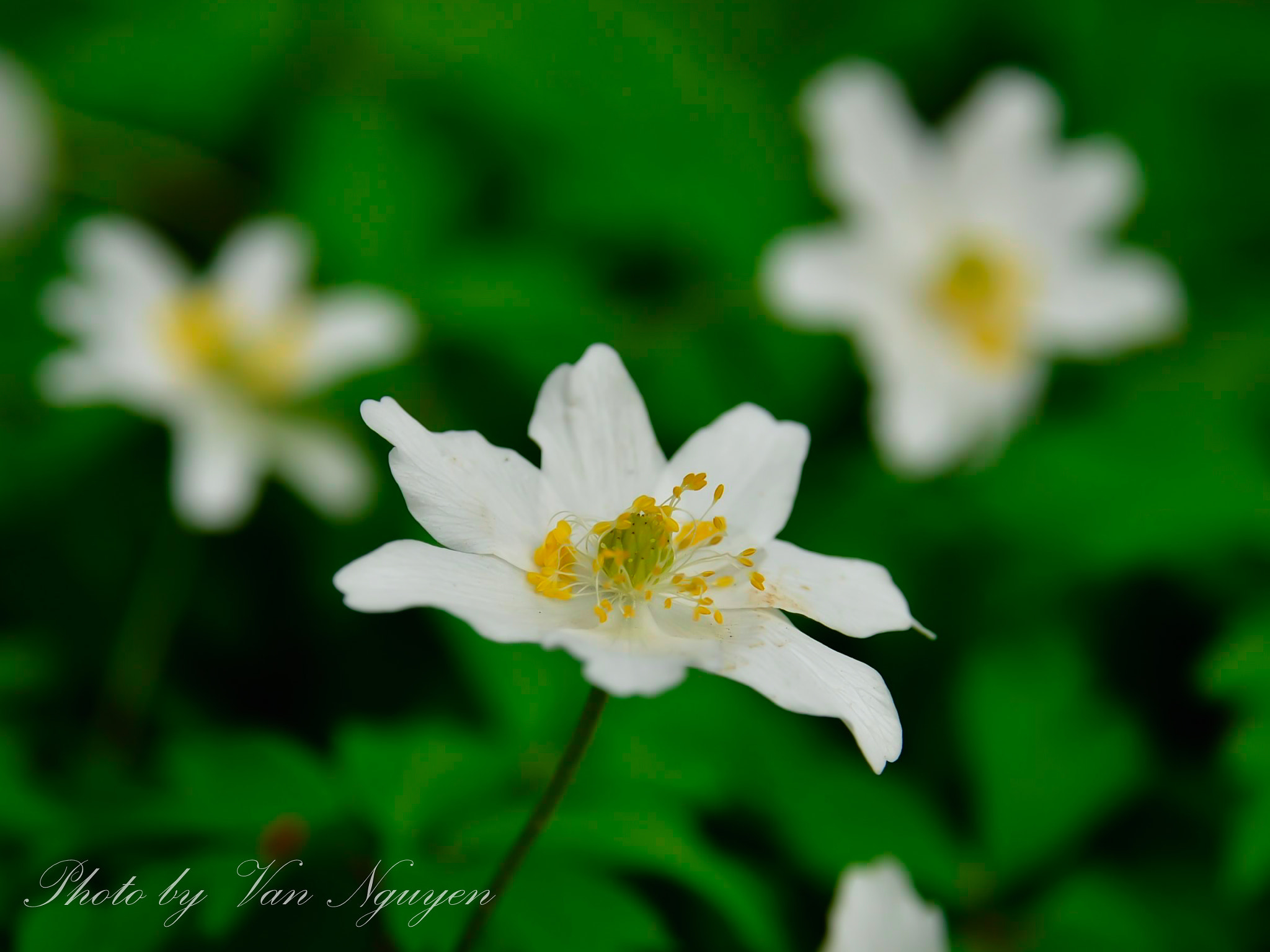 Photograph Flower 2. by Van  Nguyen on 500px