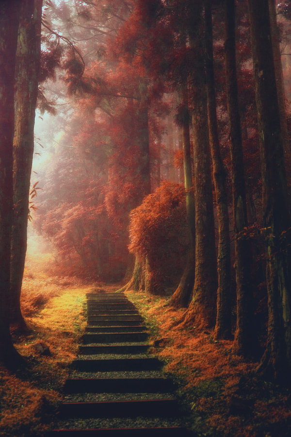 The magical path by Hanson Mao(毛延延) on 500px.com