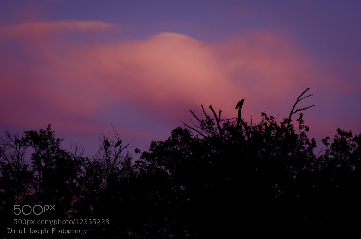 Photograph Crows On The Treetops by Daniel Joseph on 500px
