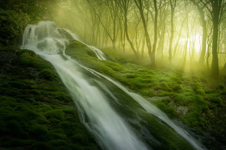 Magic Forest by Adrian Borda on 500px.com