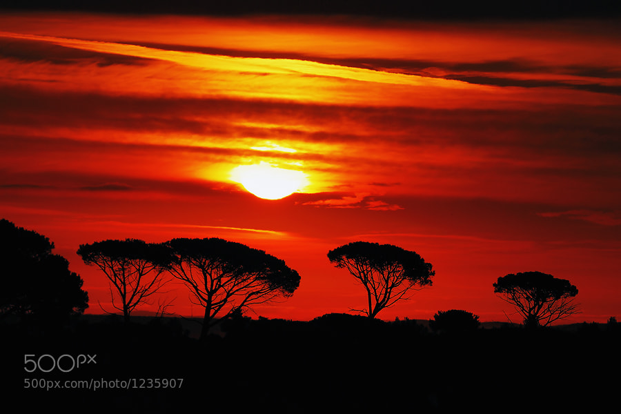 Could be sunrise somewhere in African savanna but it's actually outskirts of Zadar, Croatia