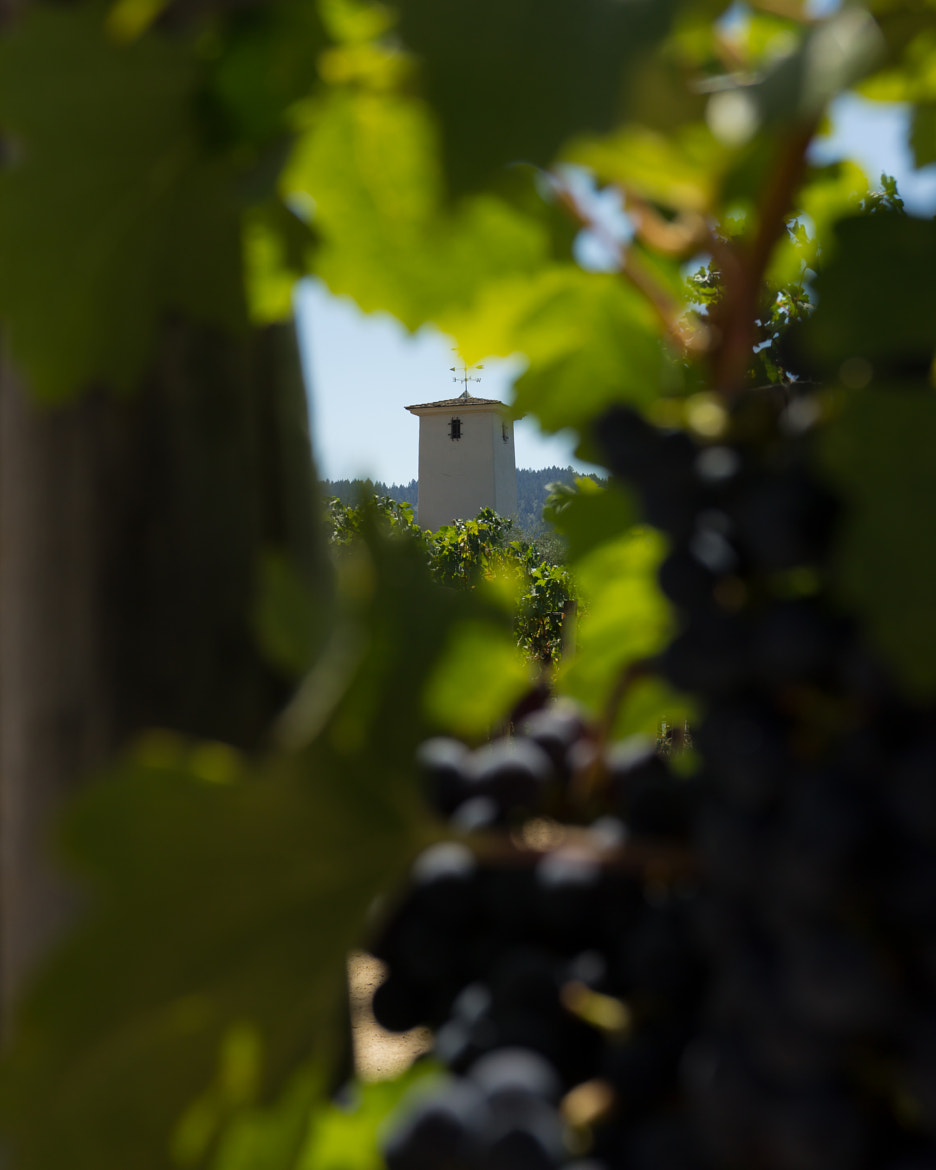 Photograph Wineries of Napa by Robert Clark on 500px