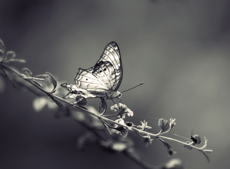 Photograph Butterfly B&W by Diana  Duque  on 500px