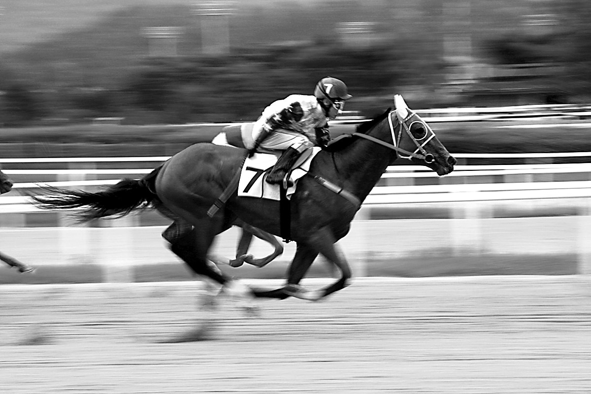 Photograph gallop by Reonis  on 500px