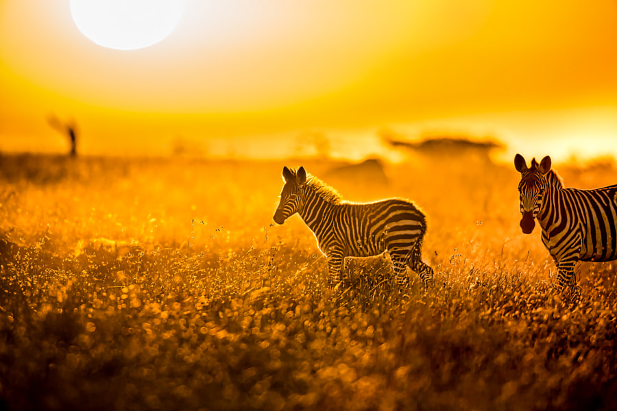 Golden Morning by Ralph Winter on 500px.com