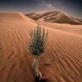 Quiet Night by Nasser  AlOthman (nasser-alothman)) on 500px.com