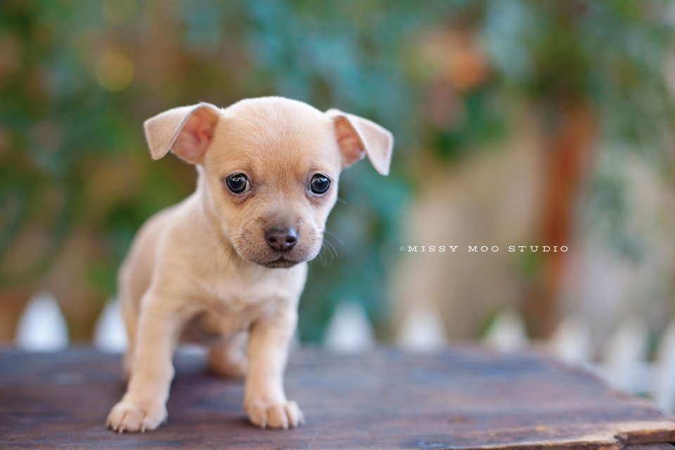Photograph Blondie by Julie Saraceno on 500px