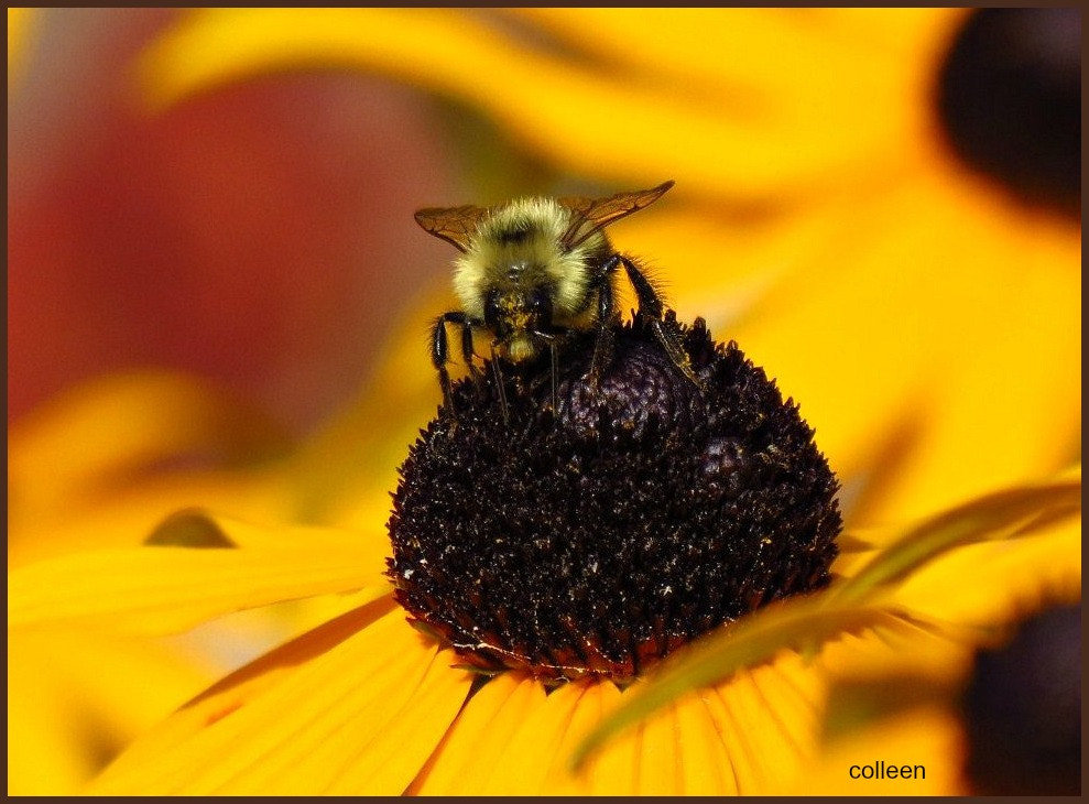 Photograph Bee's Knees! by colleen thurgood on 500px